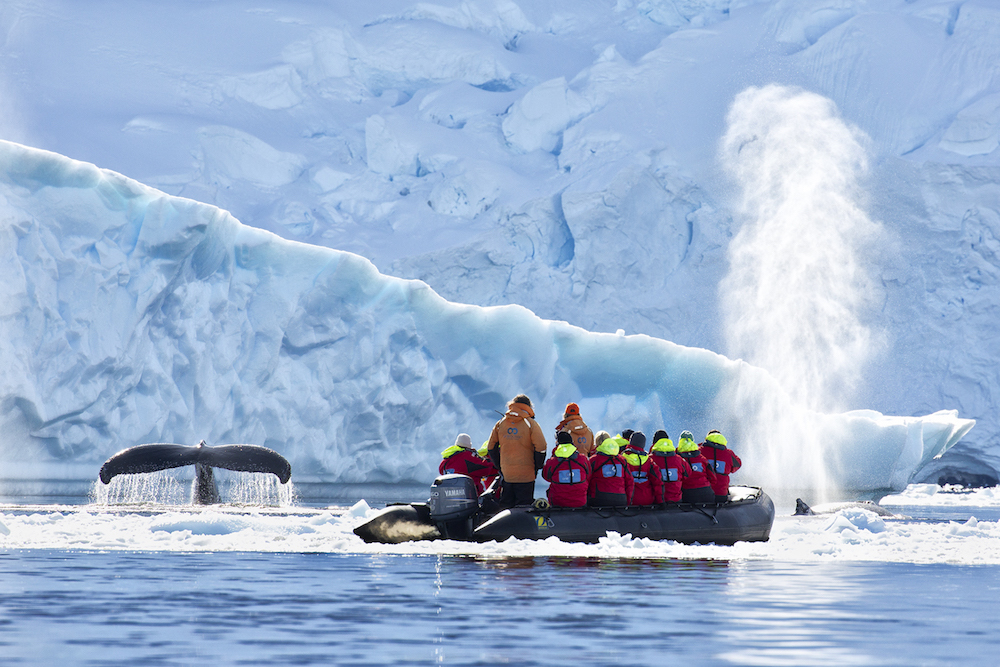 One Ocean Expeditions offers mind blowing whale watching tours in Antarctica.