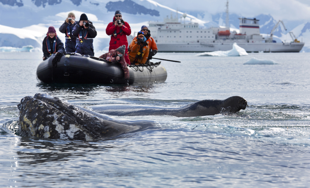 Passengers of One Ocean Expeditions enjoy a zodiac tour in Antarctica.