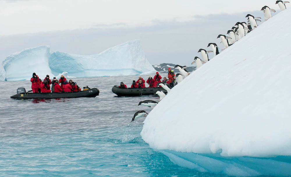 Expedition cruise passengers witness penguins jumping into the cold Antarctic water.
