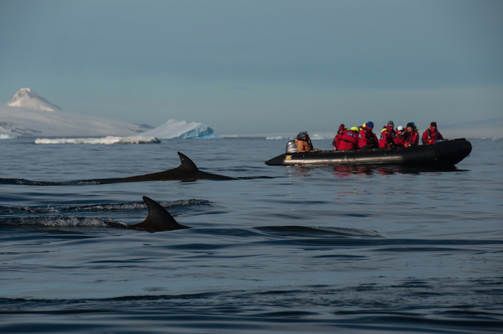 Whale watching is a favored activity on an expedition cruise in Antarctica.
