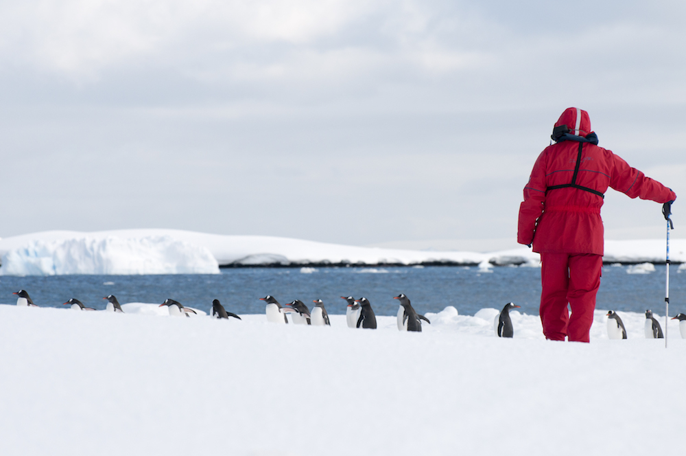 One Ocean Expedition passenger watches a penguin colony in Antarctica.